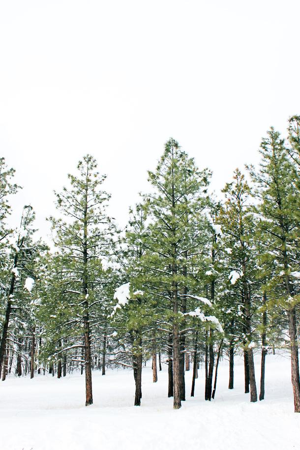 My Solo Trip to Flagstaff (www.laurelandfern.com)